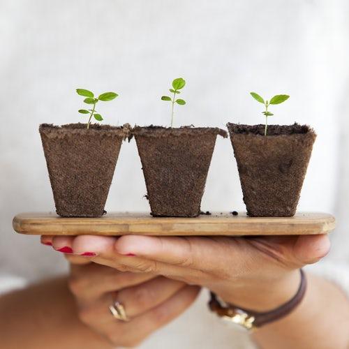 House and garden so gnojila za vse faza vegetacije